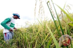 Mencapai swasembada dengan membangun kesejahteraan petani