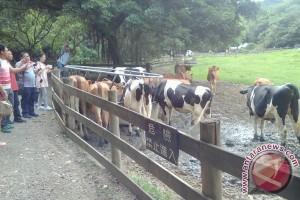 Flying Cow Ranch, menggabungkan sapi dan kupu-kupu