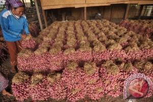 Bulog gandeng OJK bangun kampung bawang di Brebes
