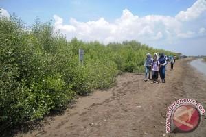 Pertamina tanam ribuan bibit mangrove di Indramayu