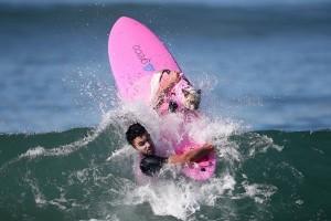 60 anjing berselancar menerjang gelombang di California