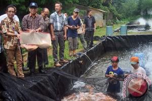 IPB panen 3 ton ikan nila unggulan