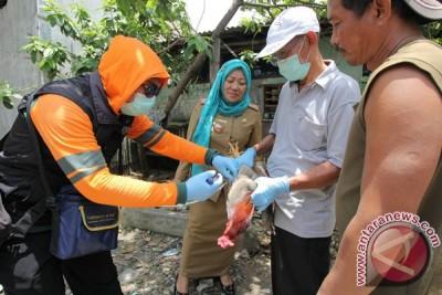 Seorang warga Bandarlampung positif terinfeksi flu burung