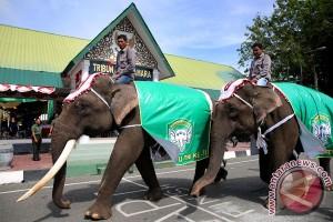 Gajah Meriahkan HUT TNI