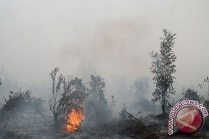 Peneliti kenalkan sistem peringatan dini kebakaran gambut