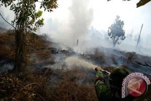 50 hektare lahan gambut di Meranti terbakar