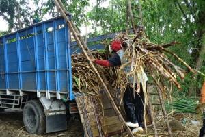 APTRI: Pajak pertambahan nilai ancam swasembada gula