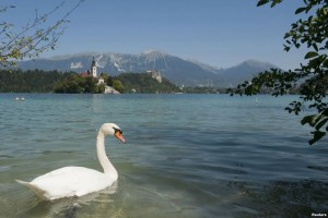 EARTH WIRE -- Tiny Slovenia world`s best at preserving environment to boost prosperity