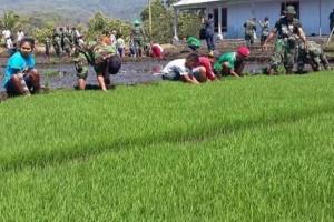 TNI AD cetak 152.000 Hektare sawah
