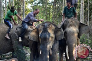Relokasi Gajah Sumatra