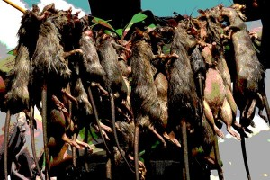 ANTARA Doeloe : Mau beli daging tikus rebus Rp 4,- sekilo