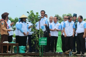 President Jokowi plants tree to mark world record event