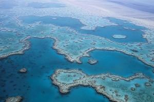 Siput laut raksasa bisa bantu penyelamatan Great Barrier Reef