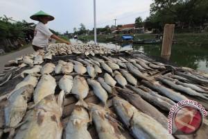 KKP : ikan bahan pangan yang mudah diproduksi