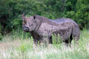 EARTH WIRE -- Climate change takes toll on Kenya`s wildlife