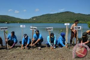 Wisata mangrove Gorontalo Utara mulai diminati
