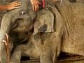 Bayi Gajah Jalani Perawatan Intensif