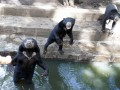 Kasus Beruang Madu Bandung
