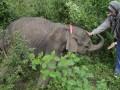 Perawatan Anak Gajah Liar