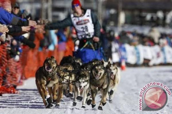 Lomba kereta luncur anjing digelar di Pegunungan Alpen Perancis
