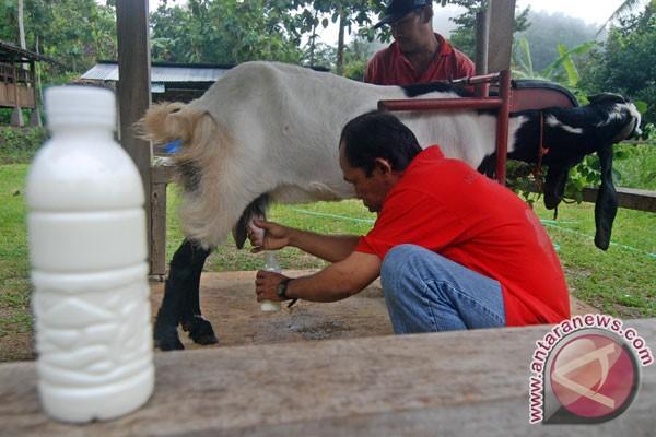 Susu Mentah Amankah? Ini Jawabannya