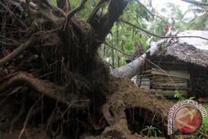 Puting beliung tumbangkan sejumlah pohon di Malang