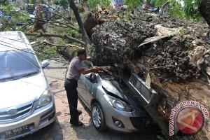 Korban tewas tertimpa pohon tumbang di dekat UI