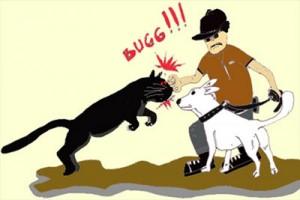 Warga Kanada tinju puma yang serang anjingnya