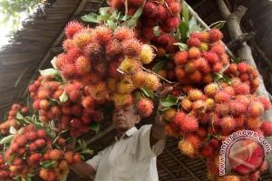 Menkes ajak masyarakat banyak konsumsi buah sayur lokal