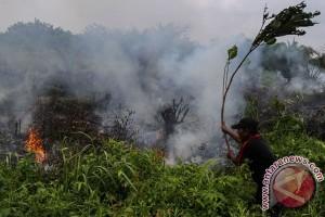 Kebakaran landa 25 hektare lahan Taman Nasional Tesso Nilo Riau