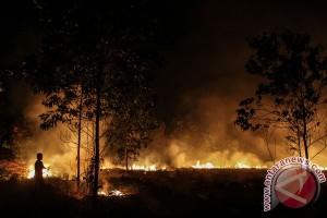 64 hektare lahan Riau terbakar sepanjang 2017