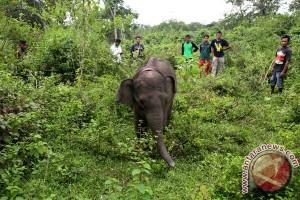 Gajah diarak di Laos saat jumlahnya menyusut