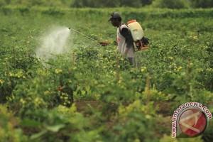 Ditemukan ulat perusak tanaman yang sedang menyebar cepat di Afrika