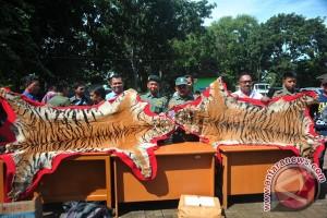 Perdagangan Kulit Harimau Sumatera