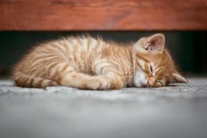 Kurang tidur berujung pada penyakit