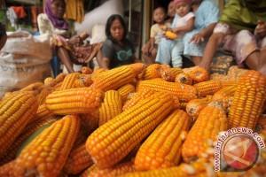 Kebutuhan jagung Banten 10.000 ton per hari