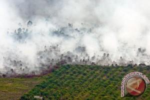 Ancaman Kebakaran Lahan Dan Hutan