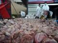 Pemusnahan Daging Celeng