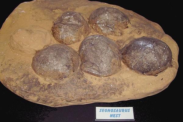 Polisi China tangkap pencuri fosil telur dinosaurus