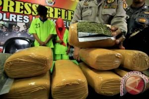 Polres Aceh Besar musnahkan dua hektare ladang ganja