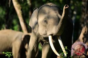 Demi gajah, Sri Lanka larang tempat pembuangan sampah terbuka