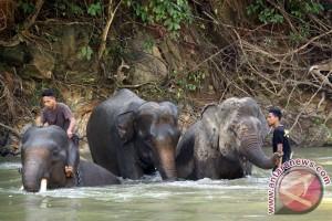 Warga Bengkulu padati objek wisata Gajah Seblat