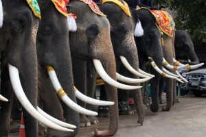 Thailand gelar prasmanan khusus untuk gajah