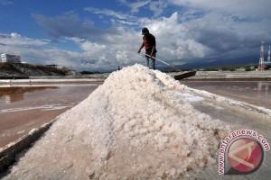 Kasus PT Garam adalah kegagalan lindungi petambak garam