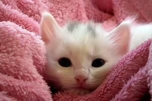 Ada parfum wangi leher kucing