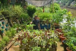 Bertani di bantaran Ciliwung, usaha yang berkembang
