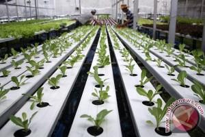 Mahasiswa Unibra kembangkan tanaman bermedia air laut