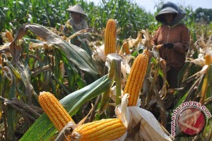 UTU sediakan prodi Teknologi Hasil Pertanian