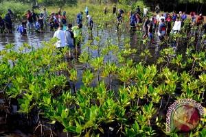 Mayoritas mangrove dinilai kurang baik