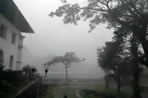Hujan angin, sejumlah pohon di Bandung tumbang